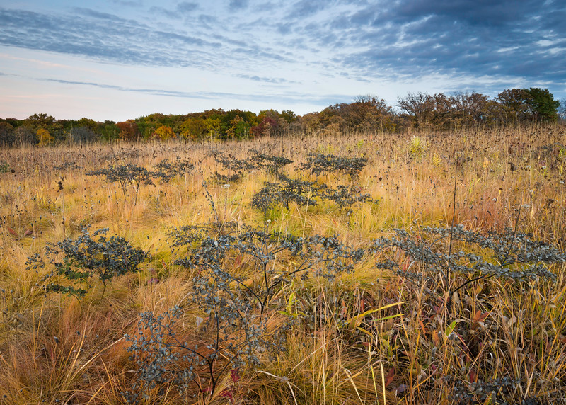 Chestnut Prairie