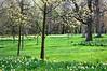 Spring Glade
