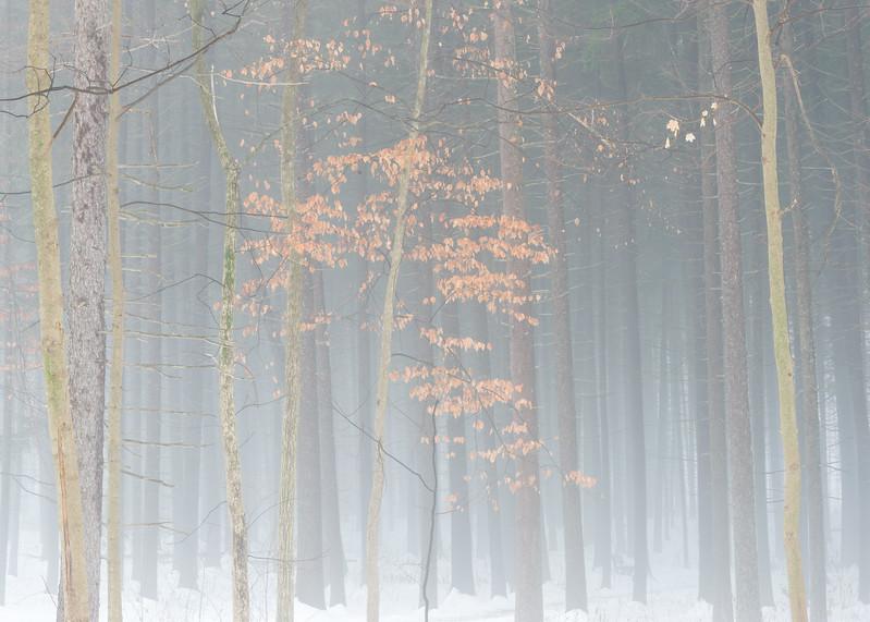 Pea Soup Spruce