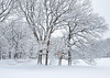 ARB 246H<br /> <br /> Fresh snow creates a beautiful winter scene at The Morton Arboretum in Lisle, Illinois.