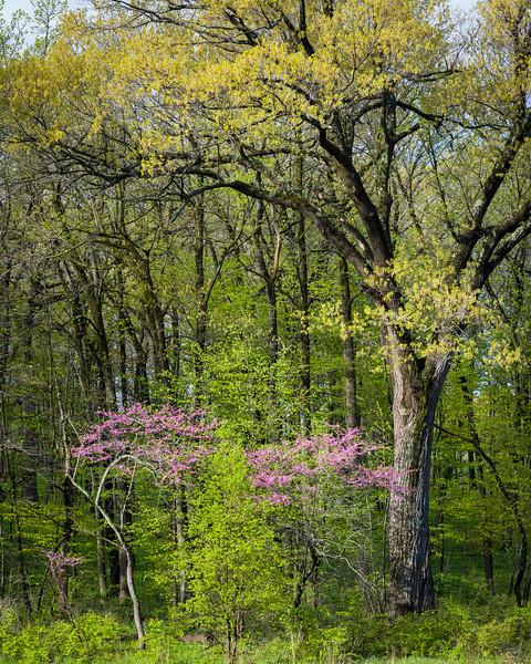Peak Spring II