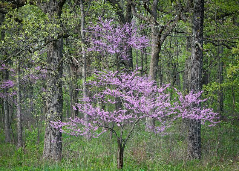 Echoing Spring