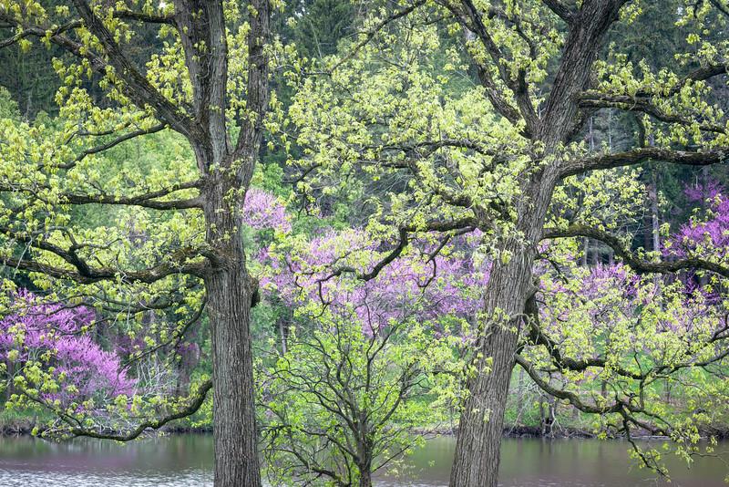 Symmetrical Spring