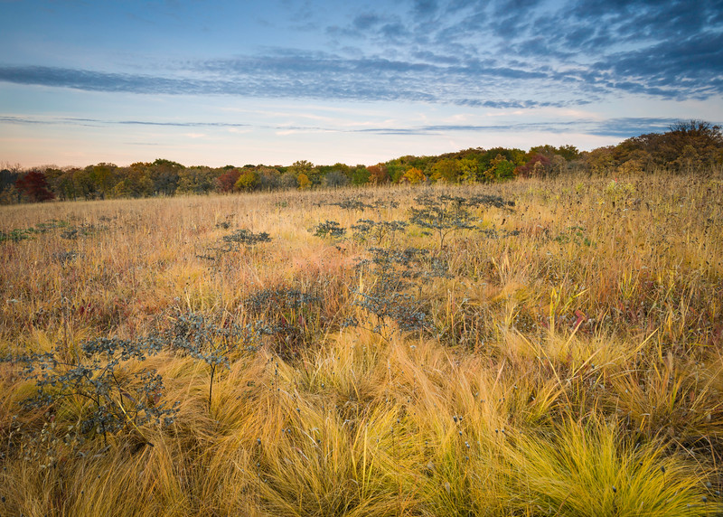ARB 170H<br /> <br /> The tones of the autumn prairie glow in the light of the setting sun at Schulenberg Prairie.  The Morton Arboretum, Lisle, Illinois.