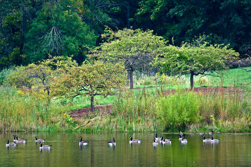Crabapple Lake Flock