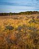 Autumn Prairie II