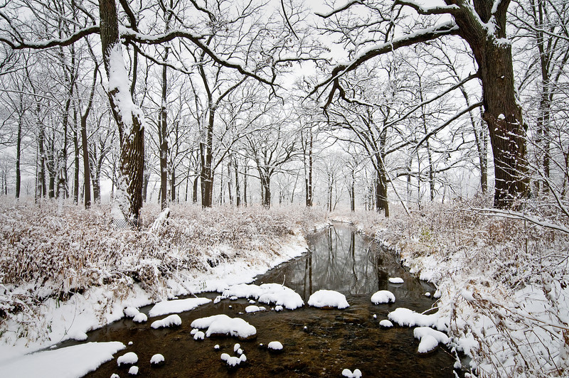Fresh Snow on Willoway
