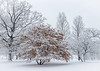 ARB 244H<br /> <br /> Fresh snow creates a beautiful winter scene at The Morton Arboretum in Lisle, Illinois.