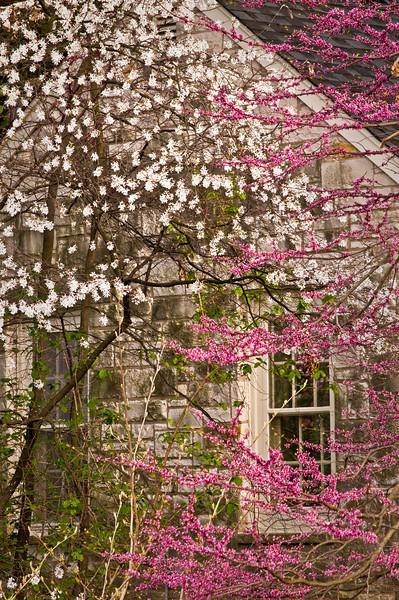 Thornhill Annex in Spring