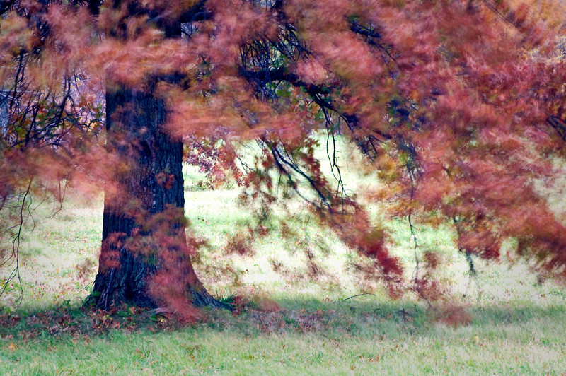 November Wind