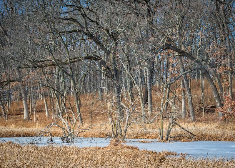 December Marsh II