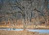 ARB 234H<br /> <br /> Winter light on a small marsh at The Morton Arboretum, Lisle, Illinois.