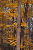 November Trees II