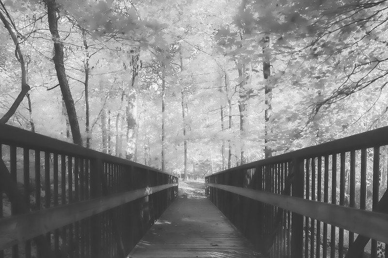 Beall Woods State Park in Mount Carmel Illinois