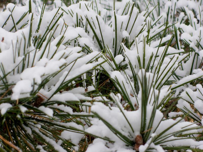 Snow in Niles