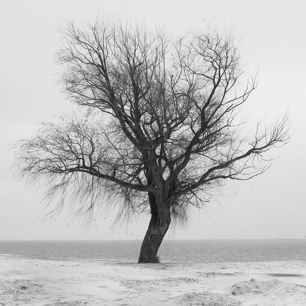 Lake Sentinel