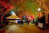 Zoolights Festival