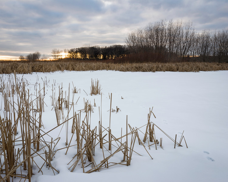 BW 003<br /> <br /> Sunset over a winter marsh at Big Woods Forest Preserve, DuPage County, Illinois.