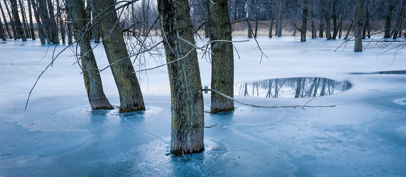 BW 005<br /> <br /> Winter twilight in a group of flooded trees.  Big Woods Forest Preserve, DuPage County, Illinois.