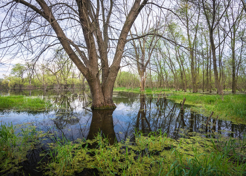 BW 013<br /> <br /> Vernal pools reflect the colors of an emerging spring season at Big Woods Forest Preserve, DuPage County, Illinois.