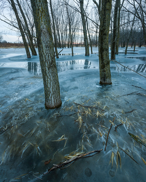 BW 008<br /> <br /> A winter twilight in a flooded woods.  Big Woods Forest Preserve, DuPage County, Illinois.
