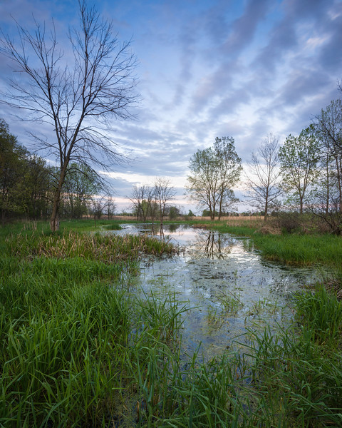 BW 015<br /> <br /> Dusk on a small marsh at Big Woods Forest Preserve, DuPage County, Illinois.