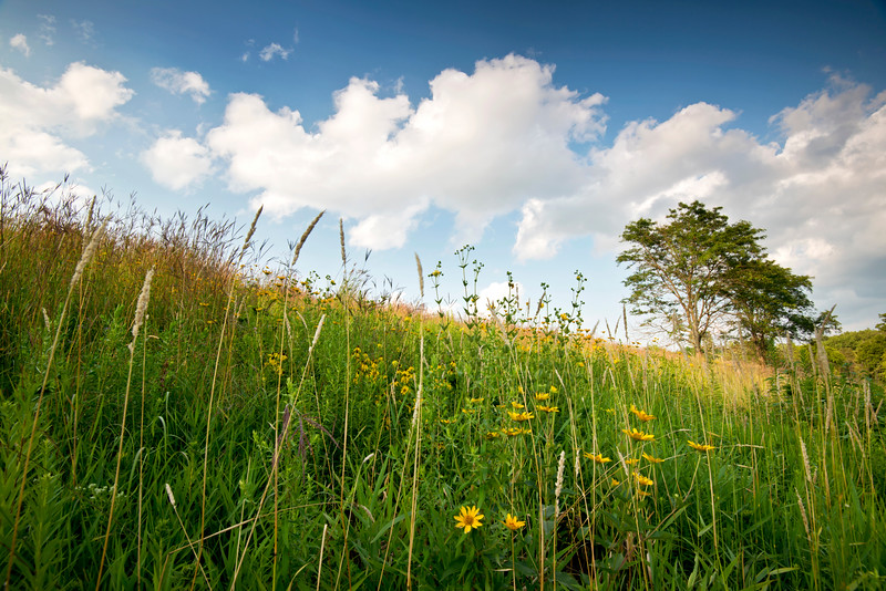 BFP 007<br /> <br /> A former landfill now converted into a beautiful restored prairie at Blackwell Forest Preserve, DuPage County, Illinois.