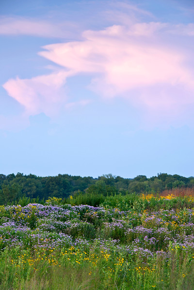 BFP 014<br /> <br /> Sunset over a restored prairie of native wildflowers at Blackwell Forest Preserve, DuPage County, Illinois.