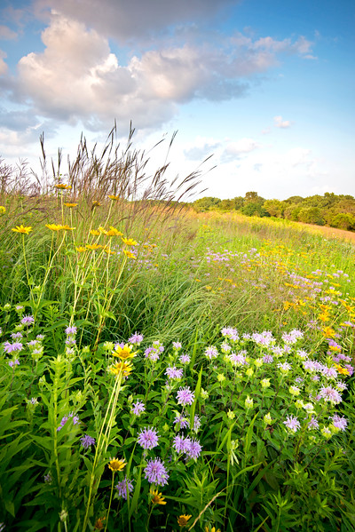 BFP 009<br /> <br /> A former landfill now converted into a beautiful restored prairie at Blackwell Forest Preserve, DuPage County, Illinois.
