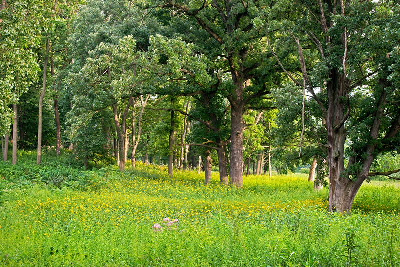 BFP 020<br /> <br /> A glacial kame is now home to an oak savanna at Blackwell Forest Preserve, DuPage County, Illinois.