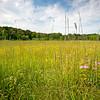 CP 016<br /> <br /> The summer prairie at Churchill Prairie Nature Preserve, DuPage County, Illinois.