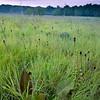 CP 010<br /> <br /> Late summer prairie at sunrise.  Churchill Prairie Nature Preserve, DuPage County, Illinois.