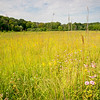 CP 015<br /> <br /> The summer prairie at Churchill Prairie Nature Preserve, DuPage County, Illinois.
