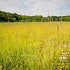 CP 015<br /> <br /> The summer prairie at Churchill Prairie Nature Preserve, DuPage County, Illinois.