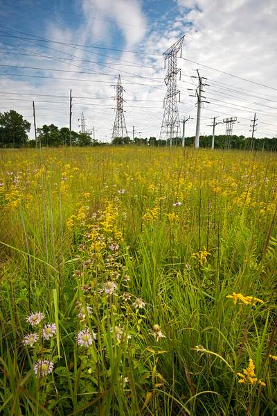 CP 021<br /> <br /> The summer prairie and its neighbor, ComEd.  Churchill Prairie Nature Preserve, DuPage County, Illinois.