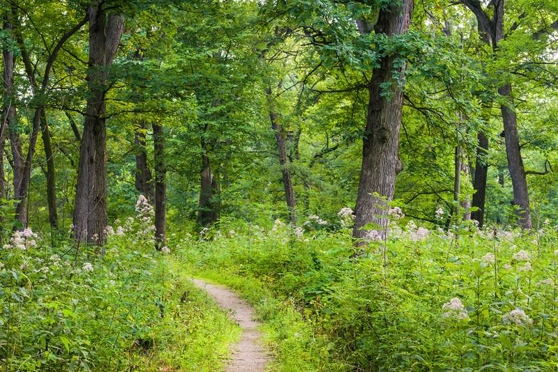 DFP 004<br /> <br /> Trails invite hikers to explore Parsons Grove at Danada Forest Preserve, DuPage County, Illinois.