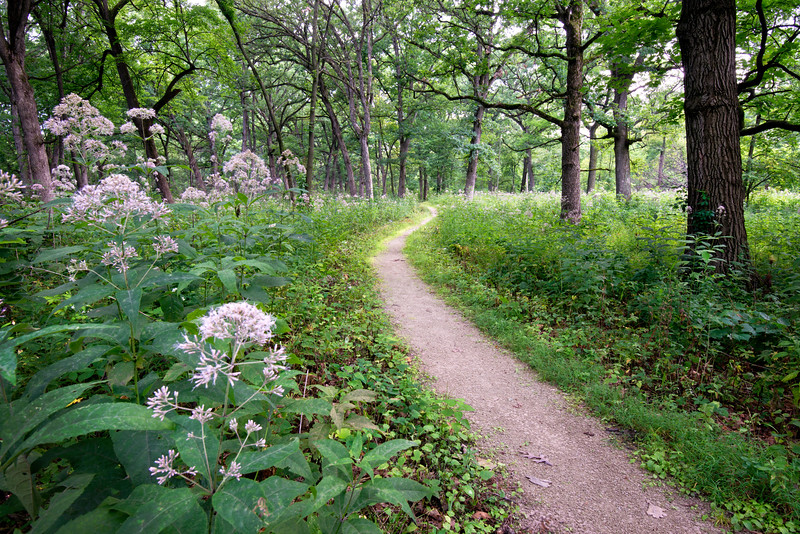 DFP 003<br /> <br /> A hiking trail winds through Parsons Grove at Danada Forest Preserve, DuPage County, Illinois.