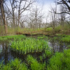 EW 004<br /> <br /> Spring rains collect in ephemeral pools at Egermann Woods Forest Preserve, DuPage County, Illinois.
