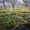 EW 006<br /> <br /> Ephemeral pools form in the springtime at Egermann Woods Forest Preserve, DuPage County, Illinois.