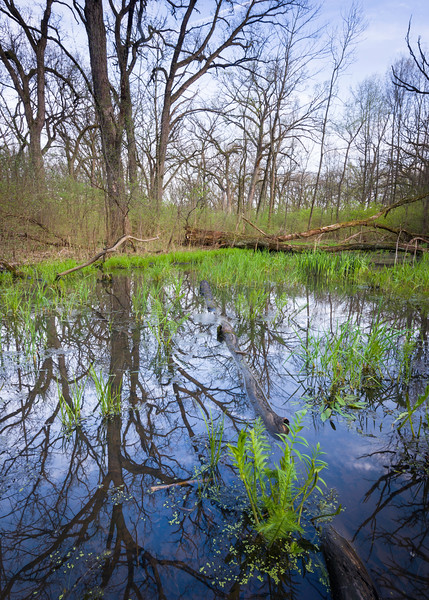 EW 0010<br /> <br /> Reflections of springtime in a vernal pool at Egermann Woods Forest Preserve, DuPage County, Illinois.