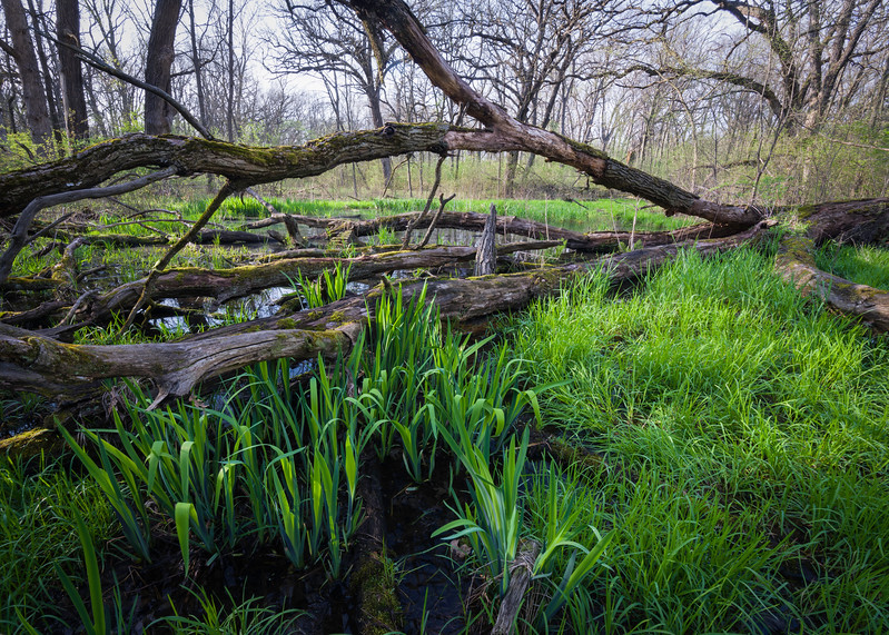 EW 008<br /> <br /> Ephemeral spring pools at Egermann Woods Forest Preserve, DuPage County, Illinois.