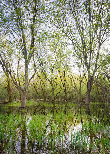 EW 013<br /> <br /> Heavy spring rains create areas of flooded woods at Egermann Woods Forest Preserve, DuPage County, Illinois.