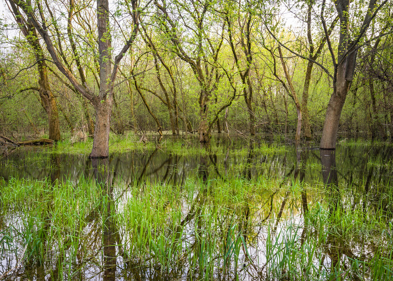 EW 012<br /> <br /> Heavy spring rains create areas of flooded woods at Egermann Woods Forest Preserve, DuPage County, Illinois.