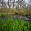 EW 005<br /> <br /> Spring rains collect in ephemeral pools at Egermann Woods Forest Preserve, DuPage County, Illinois.