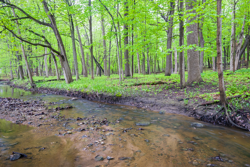 FBW 001<br /> <br /> Spring on Bronswood Tributary.  Fullersburg Woods Forest Preserve, DuPage County, Illinois.