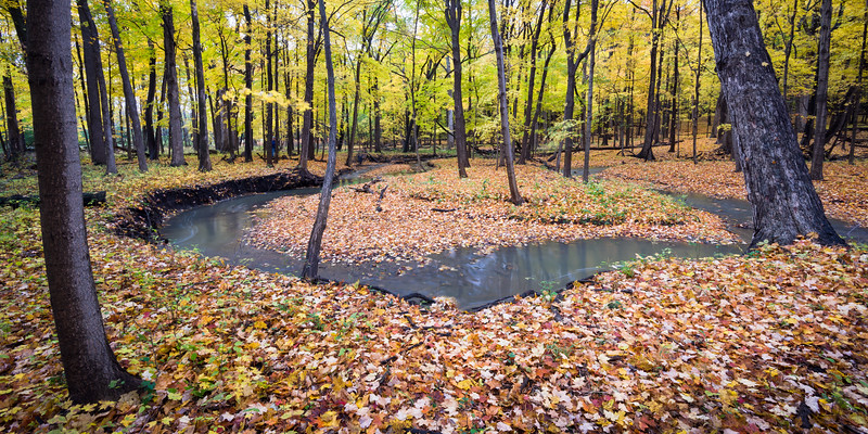 FBW 012<br /> <br /> Bronswood Tributary flows through the autumn woods at Fullersburg Woods Forest Preserve, DuPage County, Illinois.