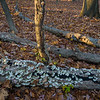 FBW 018<br /> <br /> Autumn leaves cover the forest floor at Fullersburg Woods Forest Preserve, DuPage County, Illinois.