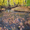FBW 013<br /> <br /> Autumn leaves gather in Bronswood Tributary at Fullersburg Woods Forest Preserve, DuPage County, Illinois.