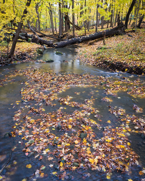 FBW 014<br /> <br /> Autumn leaves gather in Bronswood Tributary at Fullersburg Woods Forest Preserve, DuPage County, Illinois.