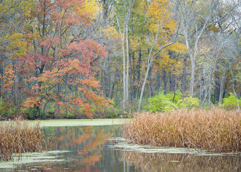 GV 010<br /> <br /> A secluded woodland pond in autumn at Greene Valley Forest Preserve, DuPage County, Illinois.